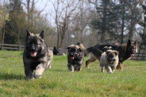 On apprend à courir vite...