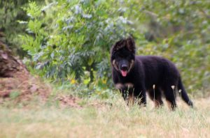 img_6533Oud-duitse herder kennel