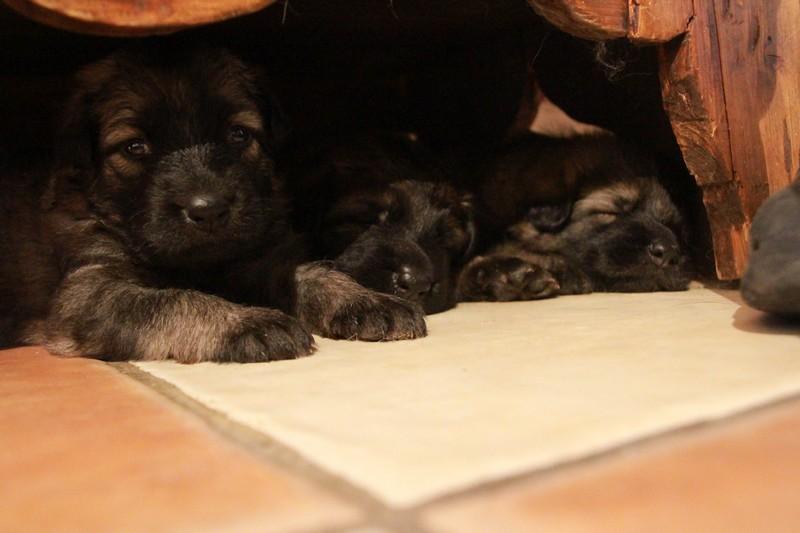 après tant d'interactions, nous nous sommes endormies sous le meuble