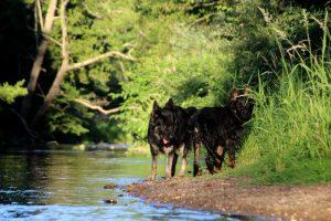 comme-chiens-et-loups 038
