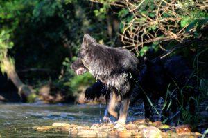comme-chiens-et-loups 070