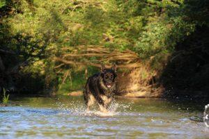 comme-chiens-et-loups 095