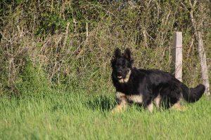 comme-chiens-et-loups 377