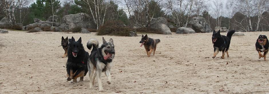 loup rencontre dog
