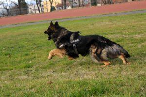 img_0422comme-chiens-et-loups