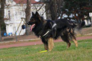 comme-chiens-et-loupsimg_0431