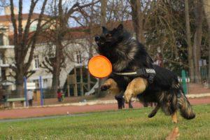 comme-chiens-et-loupsimg_0435