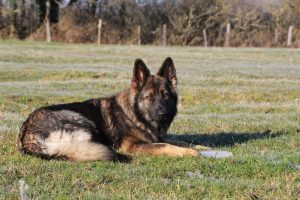 img_4611-ice-comme-chiens-et-loups