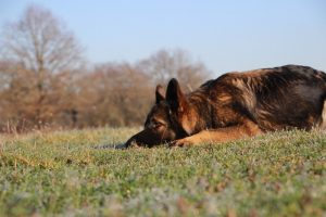 img_4623-ice-comme-chiens-et-loups