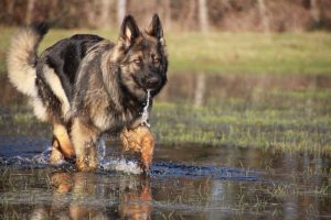 img_4931-ice-comme-chiens-et-loups
