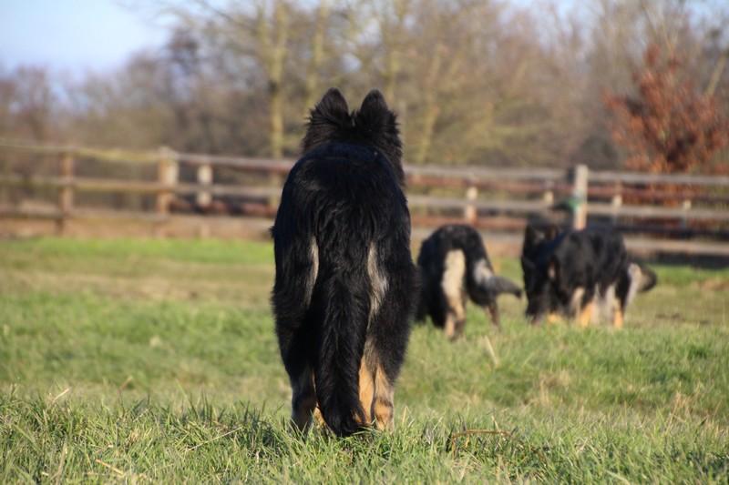 img_1335altdeutscher-schaferhund