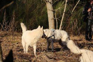 rencontre canine dan sle pilat