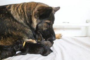 IMG_3194comme-chiens-et-loups
