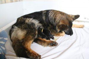IMG_3198comme-chiens-et-loups
