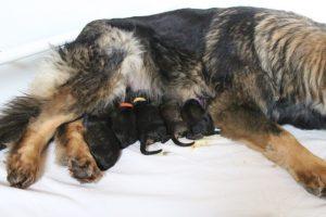 IMG_3228comme-chiens-et-loups