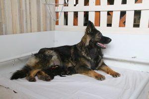 IMG_3232comme-chiens-et-loups