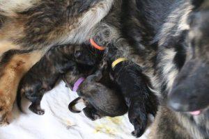 IMG_3240comme-chiens-et-loups