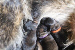 IMG_3261-comme-chiens-et-loups
