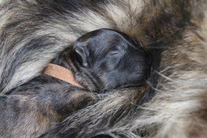IMG_3262-comme-chiens-et-loups