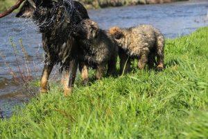 Copie de comme-chiens-et-loups 183