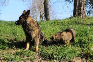 comme-chiens-et-loups 013