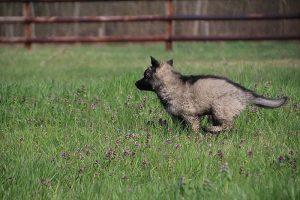 comme-chiens-et-loups 023