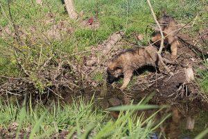 comme-chiens-et-loups 026