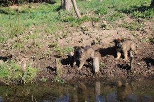 comme-chiens-et-loups 033