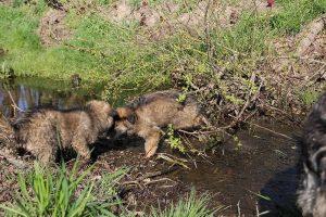 comme-chiens-et-loups 062