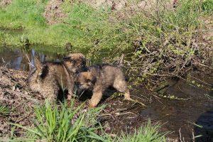 comme-chiens-et-loups 064