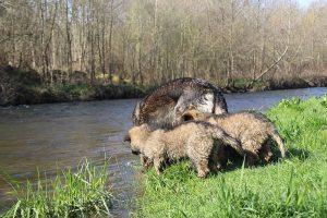comme-chiens-et-loups 073