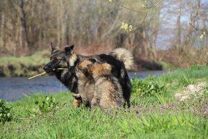 comme-chiens-et-loups 088