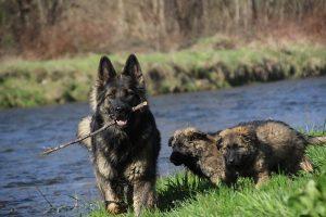 comme-chiens-et-loups 092