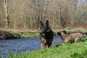 comme-chiens-et-loups 109