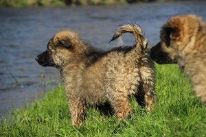 comme-chiens-et-loups 126