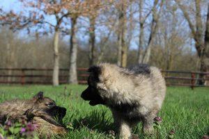 comme-chiens-et-loups 129