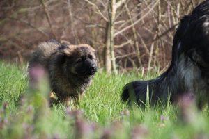 comme-chiens-et-loups 137