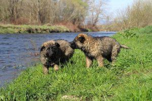comme-chiens-et-loups 143