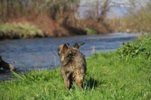 comme-chiens-et-loups 146