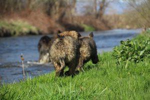 comme-chiens-et-loups 148