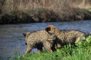 comme-chiens-et-loups 161