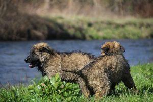 comme-chiens-et-loups 164