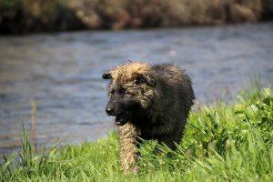 comme-chiens-et-loups 166