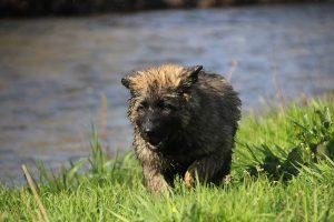 comme-chiens-et-loups 167