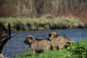 comme-chiens-et-loups 171