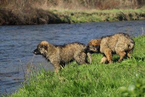 comme-chiens-et-loups 173