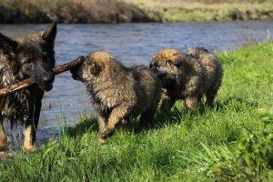 comme-chiens-et-loups 179