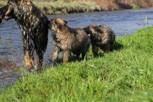 comme-chiens-et-loups 182