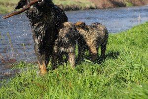comme-chiens-et-loups 184