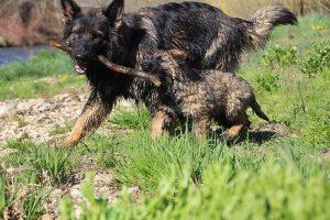 comme-chiens-et-loups 206